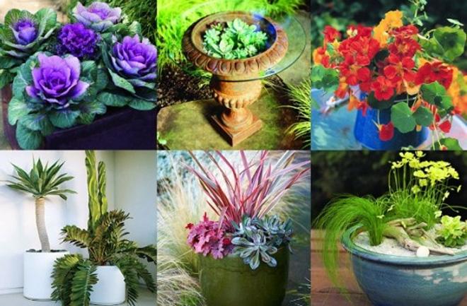 Ideje za cvijeće u teglicama - Vrt i okućnica - Magazin
