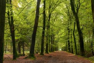 Darovanje zemljišta - šume?