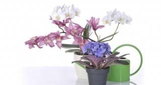 Koje su nam biljke u kući korisne
